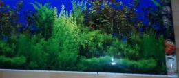 Akvarijní pozadí rostliny/korál výška 48cm