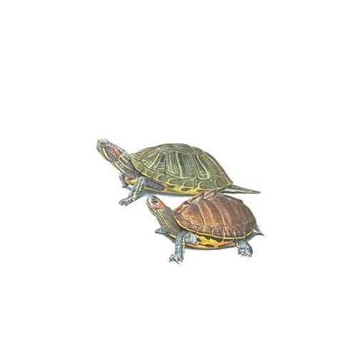 Apetit Apetit Krmivo Pro želvy 500g